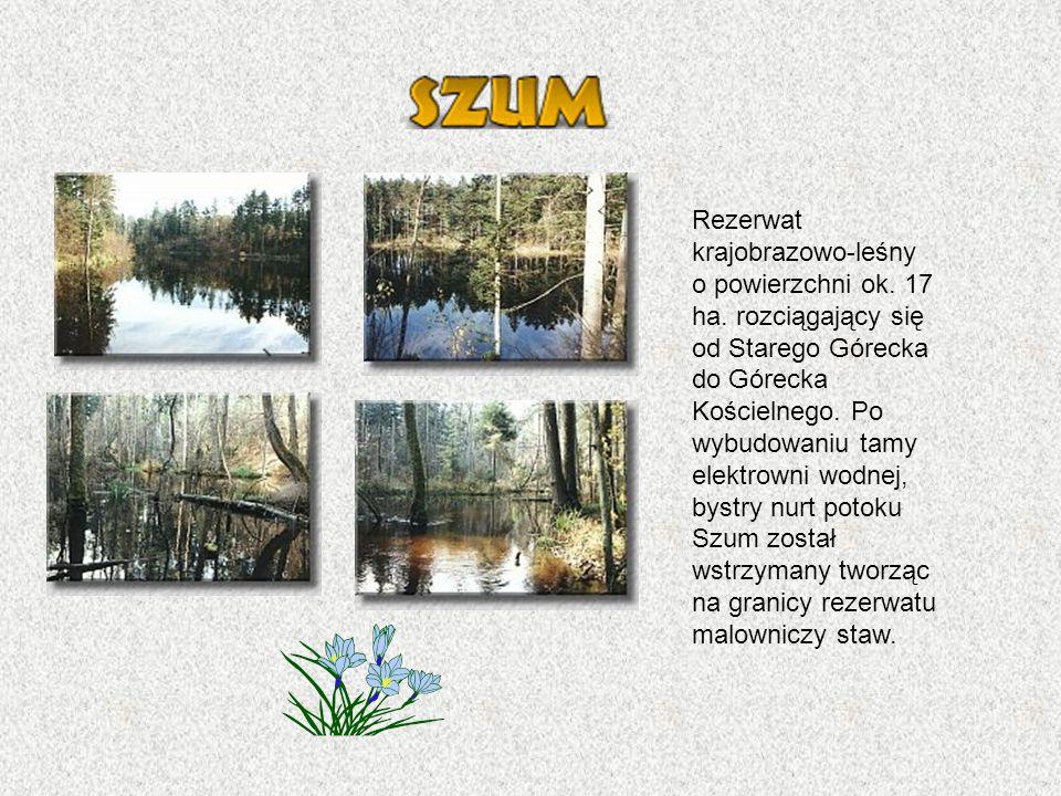 Rezerwat krajobrazowo-leśny o powierzchni ok.17 ha.