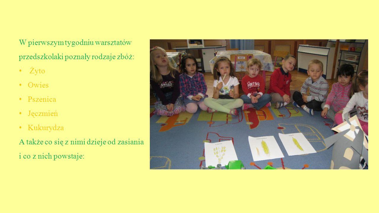 W pierwszym tygodniu warsztatów przedszkolaki poznały rodzaje zbóż: Żyto Owies Pszenica Jęczmień Kukurydza A także co się z nimi dzieje od zasiania i co z nich powstaje: