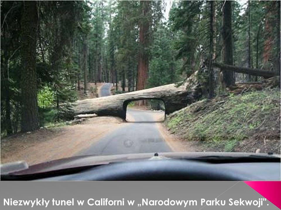 Niezwykły tunel w Californi w Narodowym Parku Sekwoji