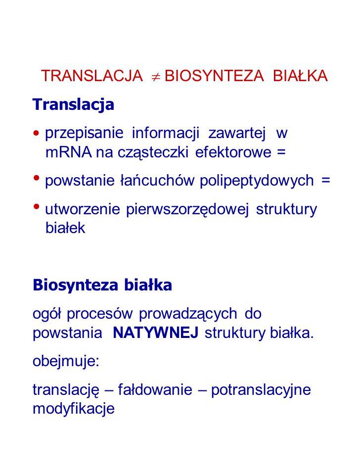 TRANSLACJA BIOSYNTEZA BIAŁKA Translacja przepisanie informacji zawartej w mRNA na cząsteczki efektorowe = powstanie łańcuchów polipeptydowych = utworzenie pierwszorzędowej struktury białek Biosynteza białka ogół procesów prowadzących do powstania NATYWNEJ struktury białka.