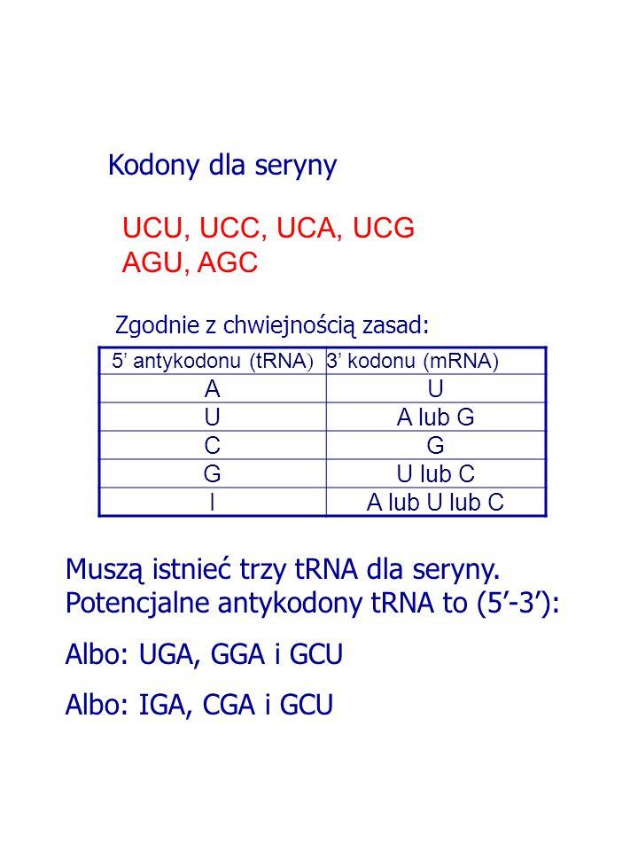 UCU, UCC, UCA, UCG AGU, AGC Kodony dla seryny 5 antykodonu (tRNA ) 3 kodonu (mRNA) AU UA lub G CG GU lub C IA lub U lub C Zgodnie z chwiejnością zasad: Muszą istnieć trzy tRNA dla seryny.