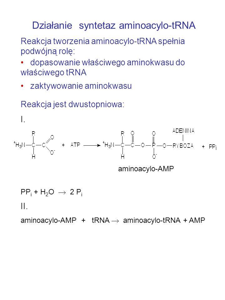 Działanie syntetaz aminoacylo-tRNA Reakcja tworzenia aminoacylo-tRNA spełnia podwójną rolę: dopasowanie właściwego aminokwasu do właściwego tRNA zaktywowanie aminokwasu Reakcja jest dwustopniowa: I.