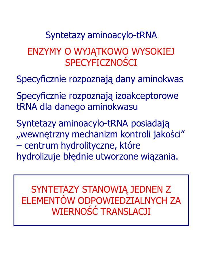 Syntetazy aminoacylo-tRNA ENZYMY O WYJĄTKOWO WYSOKIEJ SPECYFICZNOŚCI Specyficznie rozpoznają dany aminokwas Specyficznie rozpoznają izoakceptorowe tRNA dla danego aminokwasu Syntetazy aminoacylo-tRNA posiadają wewnętrzny mechanizm kontroli jakości – centrum hydrolityczne, które hydrolizuje błędnie utworzone wiązania.