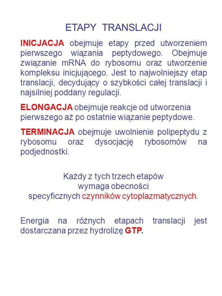 ETAPY TRANSLACJI INICJACJA obejmuje etapy przed utworzeniem pierwszego wiązania peptydowego. Obejmuje związanie mRNA do rybosomu oraz utworzenie kompl