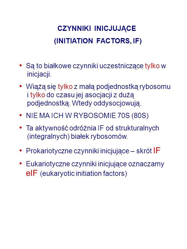 CZYNNIKI INICJUJĄCE (INITIATION FACTORS, IF) Są to białkowe czynniki uczestniczące tylko w inicjacji.