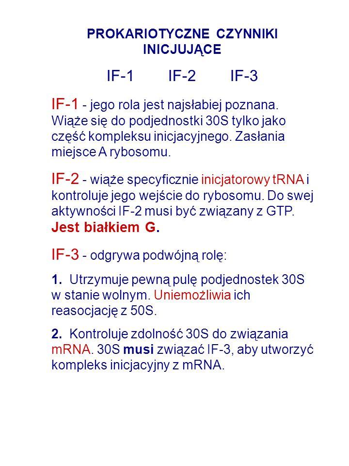 PROKARIOTYCZNE CZYNNIKI INICJUJĄCE IF-1 IF-2 IF-3 IF-1 - jego rola jest najsłabiej poznana. Wiąże się do podjednostki 30S tylko jako część kompleksu i