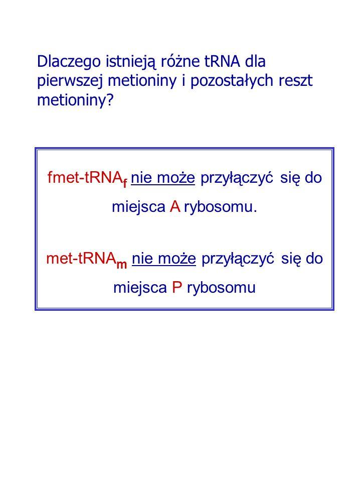 fmet-tRNA f nie może przyłączyć się do miejsca A rybosomu. met-tRNA m nie może przyłączyć się do miejsca P rybosomu Dlaczego istnieją różne tRNA dla p