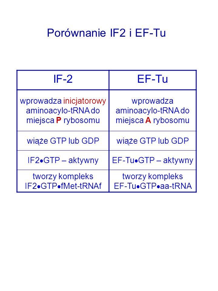 IF-2EF-Tu wprowadza inicjatorowy aminoacylo-tRNA do miejsca P rybosomu wprowadza aminoacylo-tRNA do miejsca A rybosomu wiąże GTP lub GDP IF2 GTP – aktywnyEF-Tu GTP – aktywny tworzy kompleks IF2 GTP fMet-tRNAf tworzy kompleks EF-Tu GTP aa-tRNA Porównanie IF2 i EF-Tu