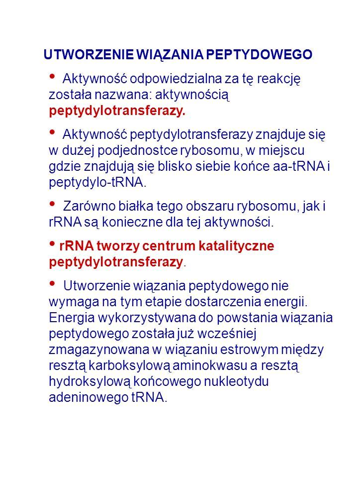 UTWORZENIE WIĄZANIA PEPTYDOWEGO Aktywność odpowiedzialna za tę reakcję została nazwana: aktywnością peptydylotransferazy. Aktywność peptydylotransfera