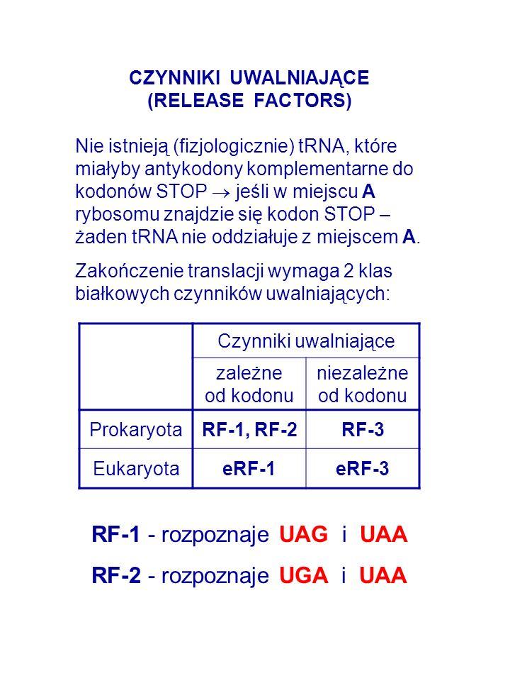 CZYNNIKI UWALNIAJĄCE (RELEASE FACTORS) Nie istnieją (fizjologicznie) tRNA, które miałyby antykodony komplementarne do kodonów STOP jeśli w miejscu A rybosomu znajdzie się kodon STOP – żaden tRNA nie oddziałuje z miejscem A.