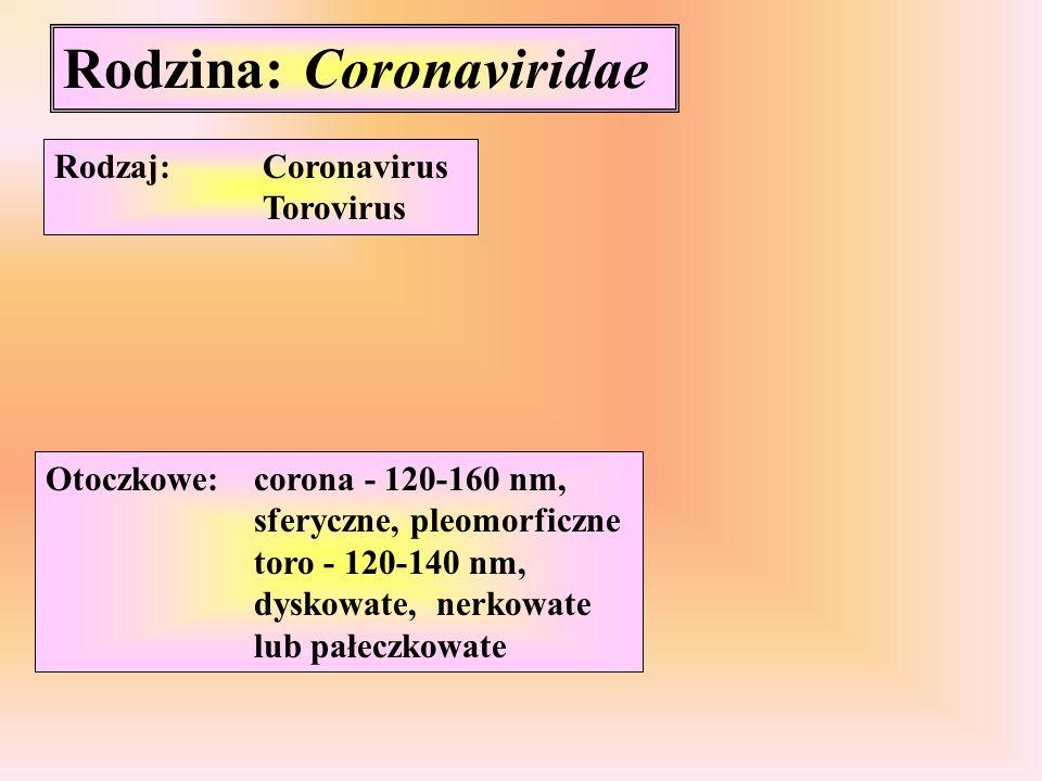 Rodzina: Coronaviridae Rodzaj:Coronavirus Torovirus Otoczkowe:corona - 120-160 nm, sferyczne, pleomorficzne toro - 120-140 nm, dyskowate, nerkowate lu