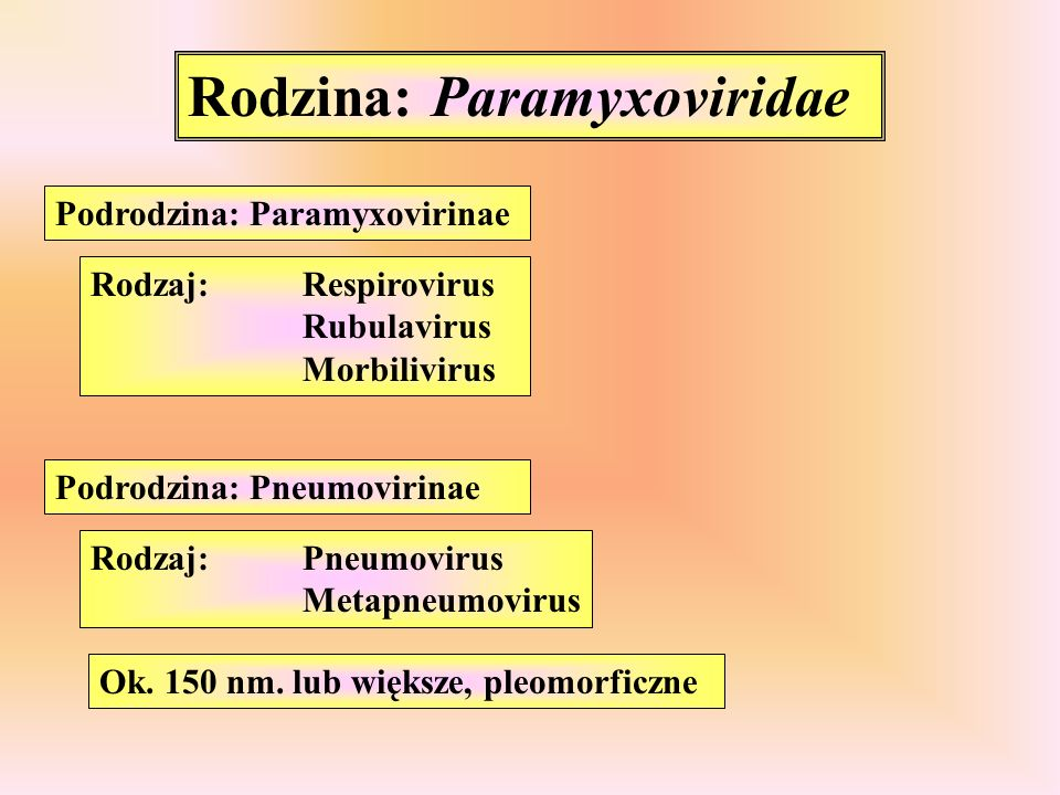 Rodzina: Paramyxoviridae Podrodzina: Paramyxovirinae Podrodzina: Pneumovirinae Rodzaj:Respirovirus Rubulavirus Morbilivirus Rodzaj:Pneumovirus Metapne
