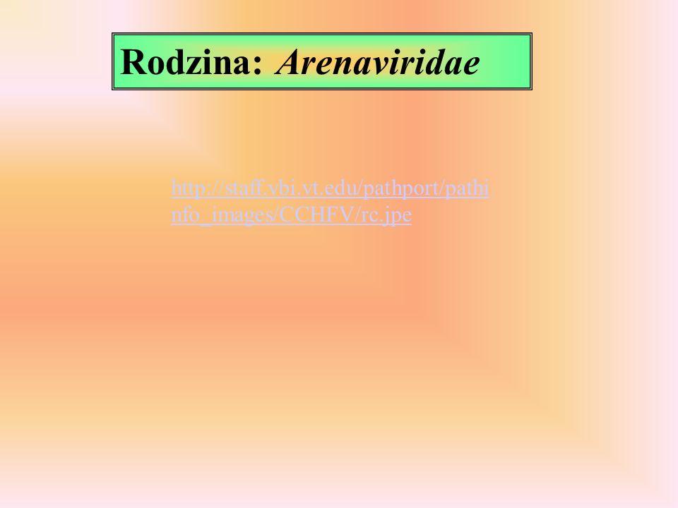 Rodzina: Arenaviridae http://staff.vbi.vt.edu/pathport/pathi nfo_images/CCHFV/rc.jpe
