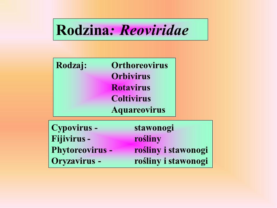 Rodzina: Reoviridae Rodzaj:Orthoreovirus Orbivirus Rotavirus Coltivirus Aquareovirus Cypovirus -stawonogi Fijivirus - rośliny Phytoreovirus -rośliny i stawonogi Oryzavirus -rośliny i stawonogi