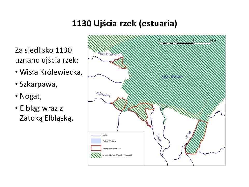 1130 Ujścia rzek (estuaria) Za siedlisko 1130 uznano ujścia rzek: Wisła Królewiecka, Szkarpawa, Nogat, Elbląg wraz z Zatoką Elbląską.