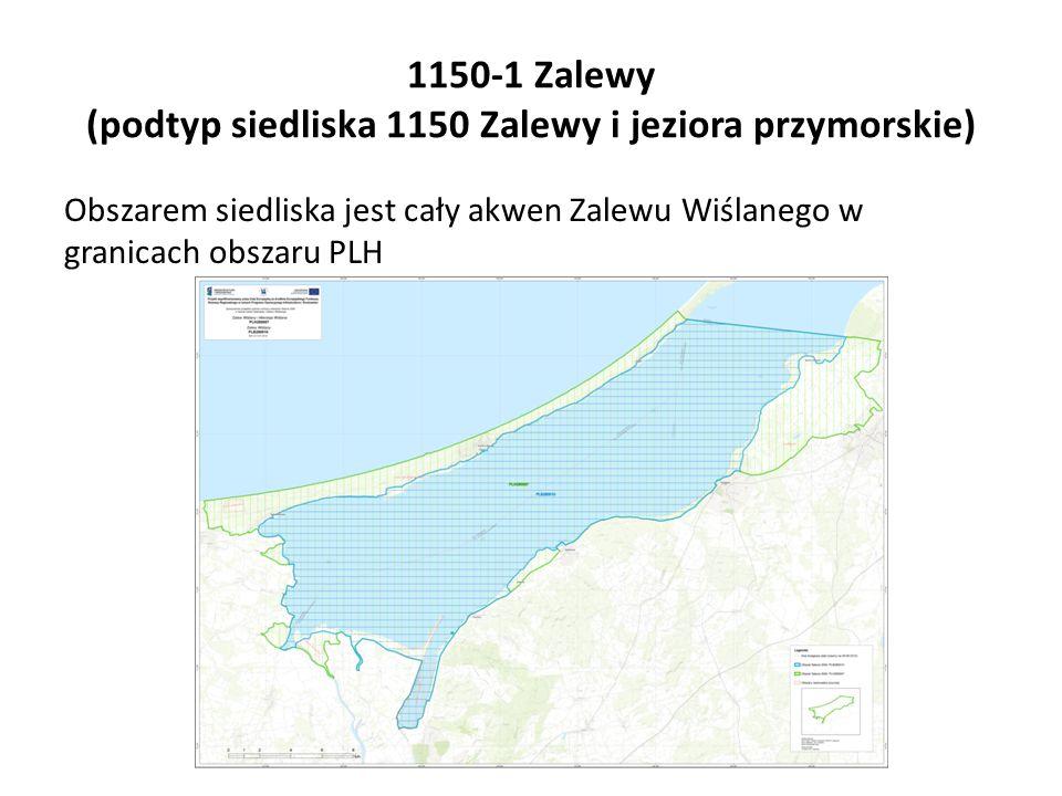 1150-1 Zalewy (podtyp siedliska 1150 Zalewy i jeziora przymorskie) Obszarem siedliska jest cały akwen Zalewu Wiślanego w granicach obszaru PLH