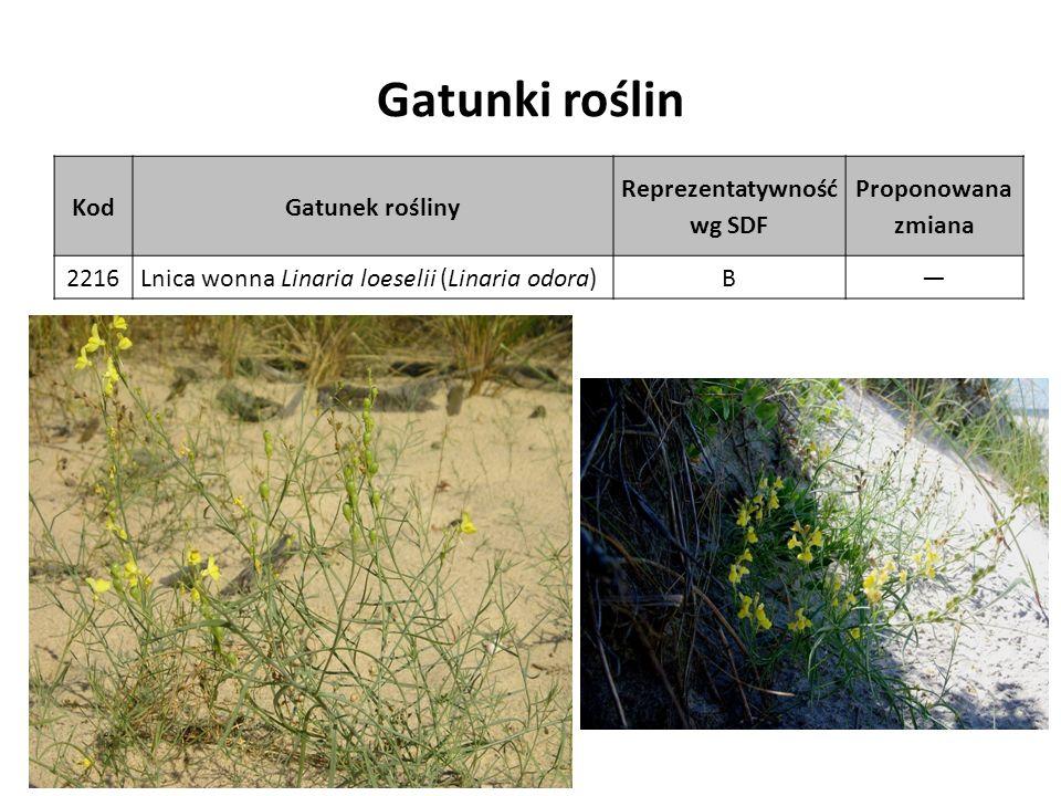 Gatunki roślin KodGatunek rośliny Reprezentatywność wg SDF Proponowana zmiana 2216Lnica wonna Linaria loeselii (Linaria odora)B