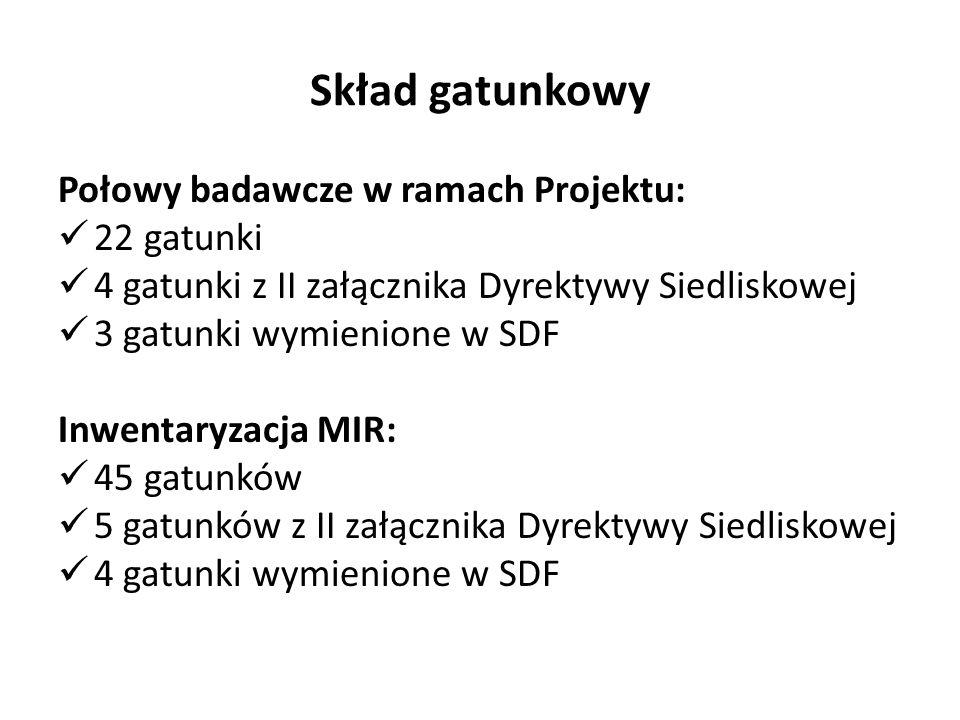 Skład gatunkowy Połowy badawcze w ramach Projektu: 22 gatunki 4 gatunki z II załącznika Dyrektywy Siedliskowej 3 gatunki wymienione w SDF Inwentaryzacja MIR: 45 gatunków 5 gatunków z II załącznika Dyrektywy Siedliskowej 4 gatunki wymienione w SDF