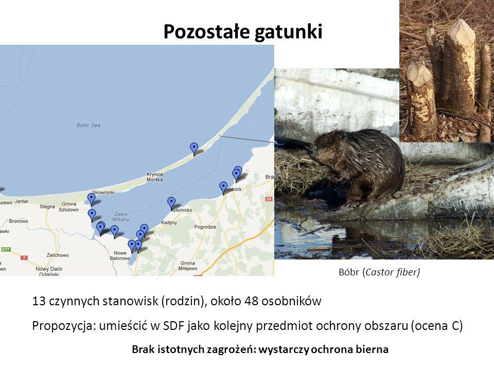 Pozostałe gatunki Bóbr (Castor fiber) Brak istotnych zagrożeń: wystarczy ochrona bierna 13 czynnych stanowisk (rodzin), około 48 osobników Propozycja: umieścić w SDF jako kolejny przedmiot ochrony obszaru (ocena C)