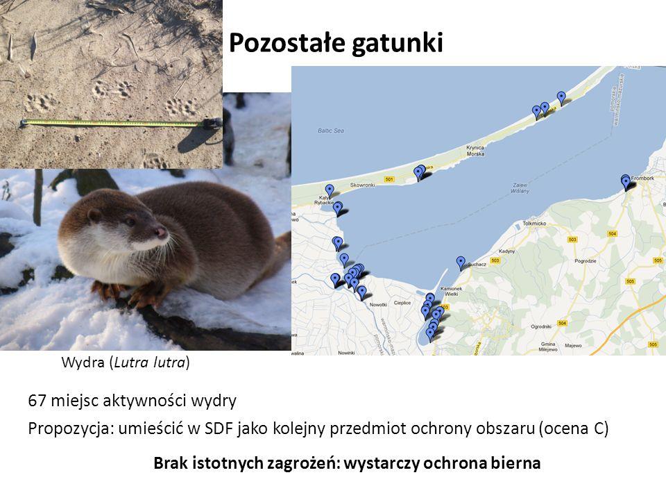 Pozostałe gatunki Wydra (Lutra lutra) 67 miejsc aktywności wydry Propozycja: umieścić w SDF jako kolejny przedmiot ochrony obszaru (ocena C) Brak istotnych zagrożeń: wystarczy ochrona bierna