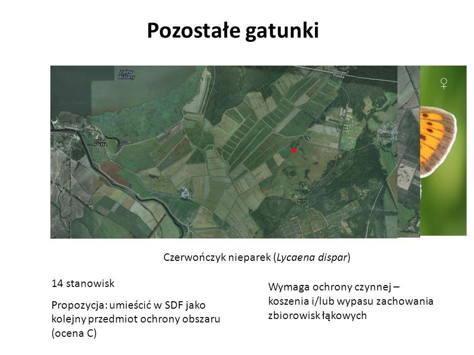 Pozostałe gatunki Czerwończyk nieparek (Lycaena dispar) 14 stanowisk Propozycja: umieścić w SDF jako kolejny przedmiot ochrony obszaru (ocena C) Wymaga ochrony czynnej – koszenia i/lub wypasu zachowania zbiorowisk łąkowych