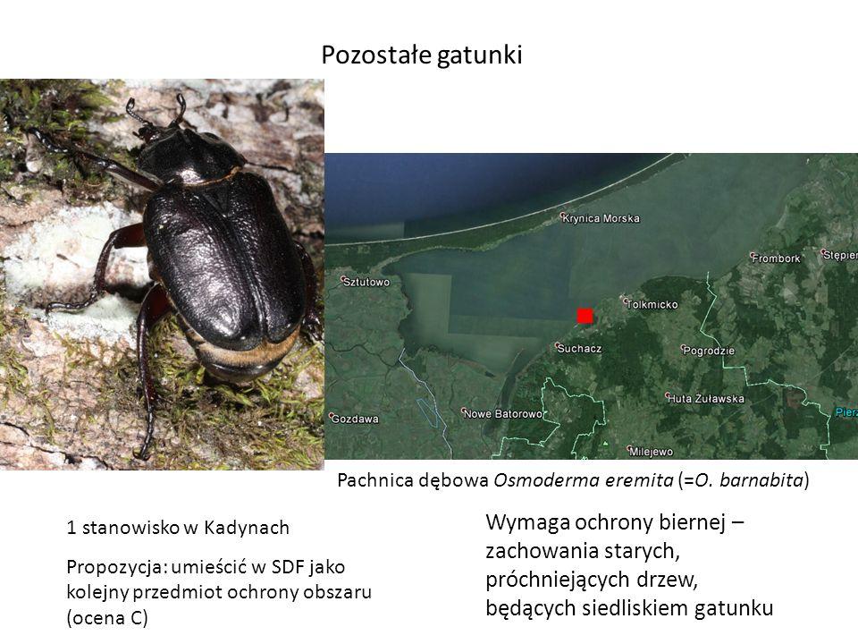Pozostałe gatunki Pachnica dębowa Osmoderma eremita (=O. barnabita) 1 stanowisko w Kadynach Propozycja: umieścić w SDF jako kolejny przedmiot ochrony