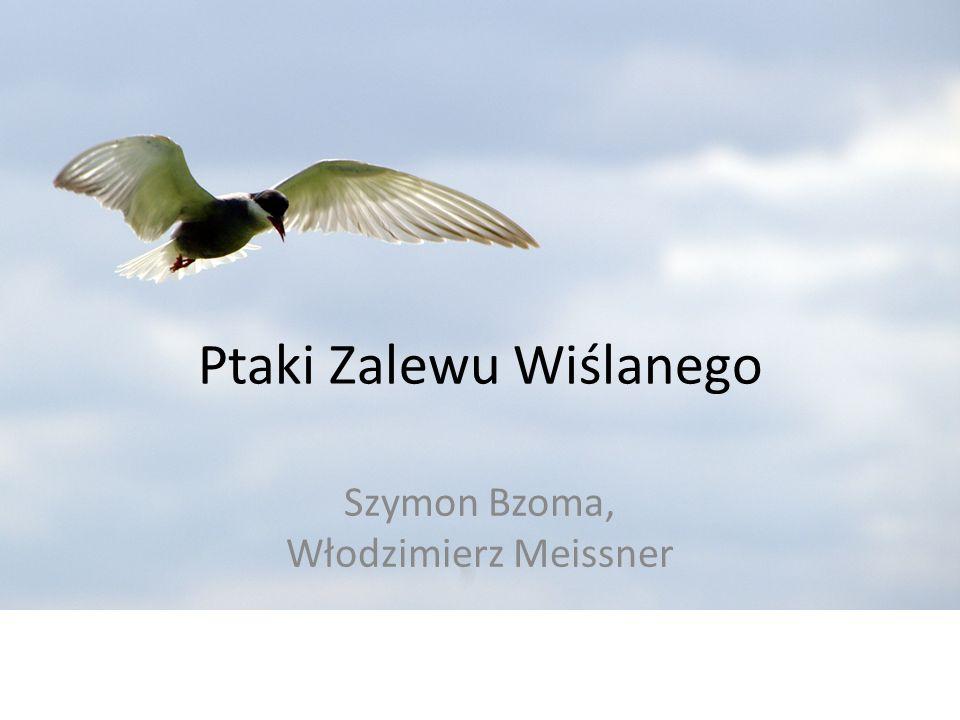 Ptaki Zalewu Wiślanego Szymon Bzoma, Włodzimierz Meissner