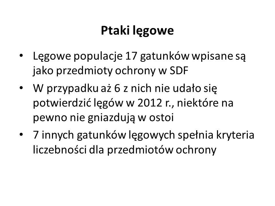Lęgowe populacje 17 gatunków wpisane są jako przedmioty ochrony w SDF W przypadku aż 6 z nich nie udało się potwierdzić lęgów w 2012 r., niektóre na pewno nie gniazdują w ostoi 7 innych gatunków lęgowych spełnia kryteria liczebności dla przedmiotów ochrony