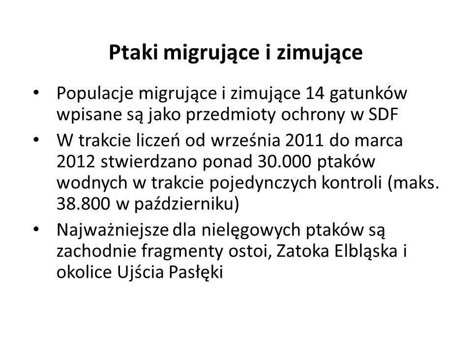 Populacje migrujące i zimujące 14 gatunków wpisane są jako przedmioty ochrony w SDF W trakcie liczeń od września 2011 do marca 2012 stwierdzano ponad