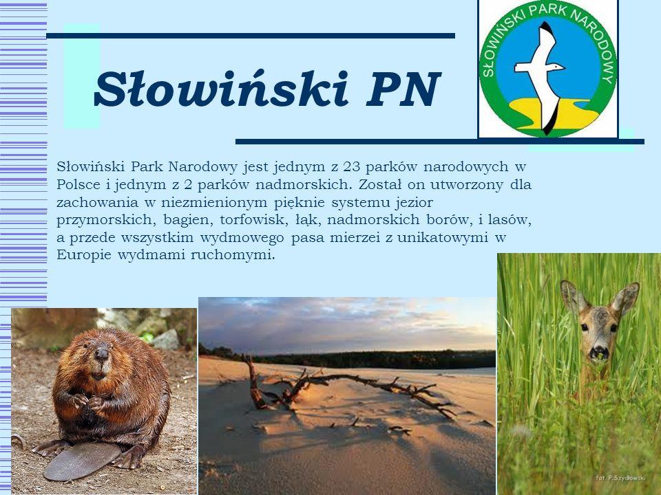 Słowiński PN Słowiński Park Narodowy jest jednym z 23 parków narodowych w Polsce i jednym z 2 parków nadmorskich. Został on utworzony dla zachowania w
