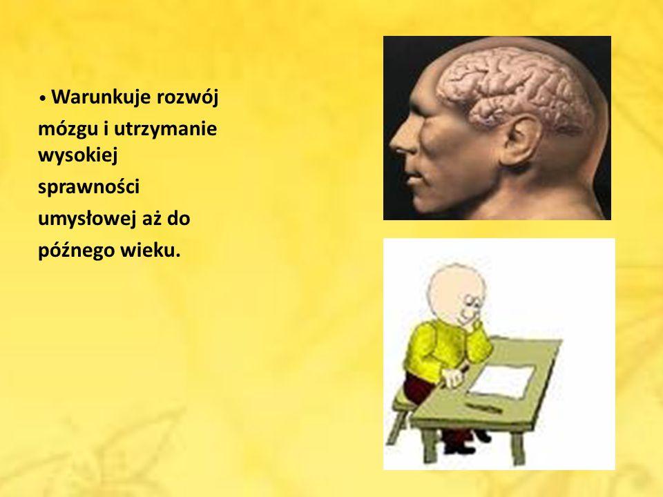 Warunkuje rozwój mózgu i utrzymanie wysokiej sprawności umysłowej aż do późnego wieku.