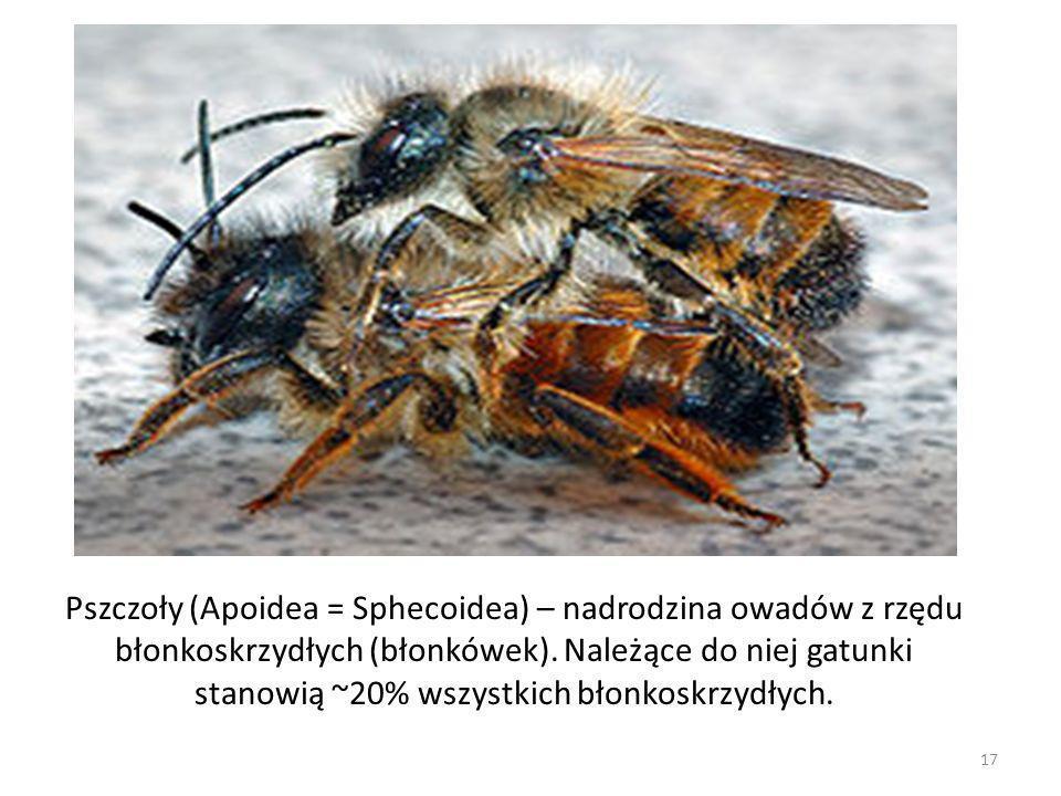 Pszczoły (Apoidea = Sphecoidea) – nadrodzina owadów z rzędu błonkoskrzydłych (błonkówek). Należące do niej gatunki stanowią ~20% wszystkich błonkoskrz