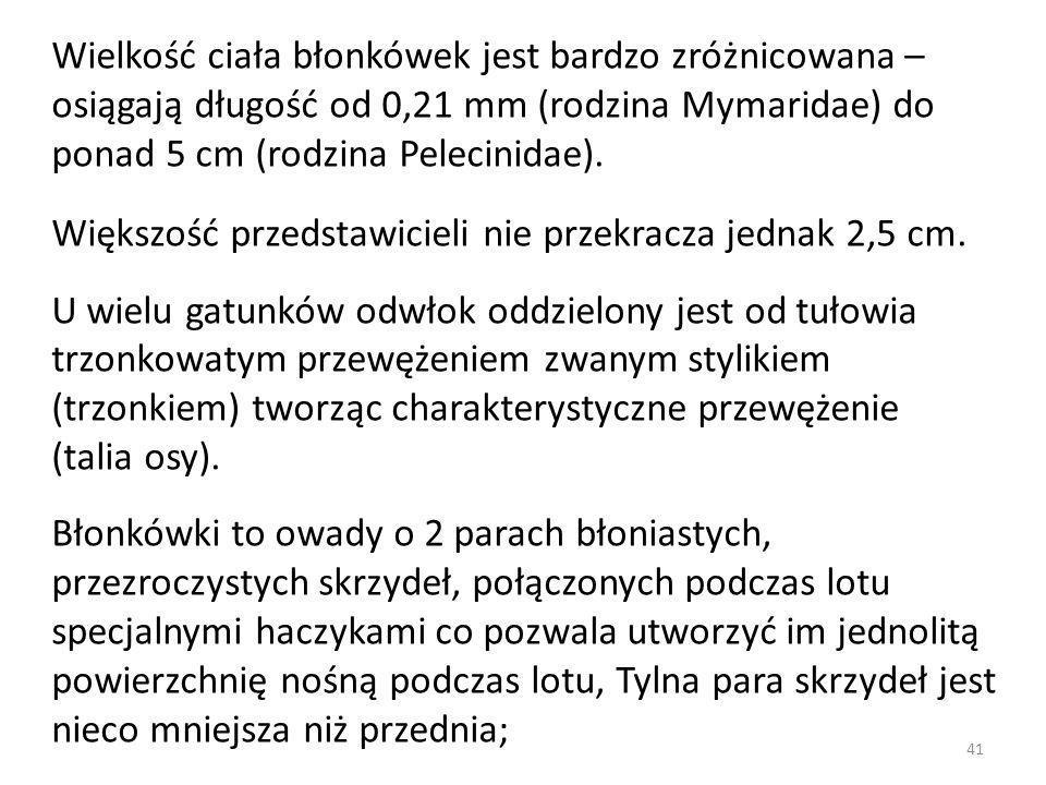 Wielkość ciała błonkówek jest bardzo zróżnicowana – osiągają długość od 0,21 mm (rodzina Mymaridae) do ponad 5 cm (rodzina Pelecinidae). Większość prz