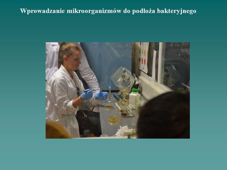 Wprowadzanie mikroorganizmów do podłoża bakteryjnego