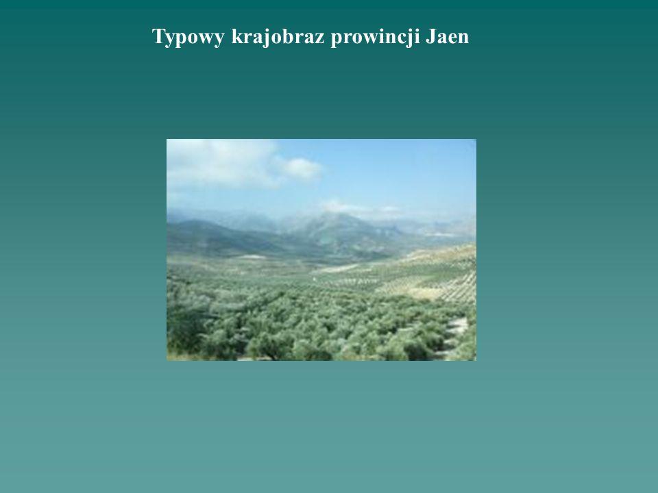 Typowy krajobraz prowincji Jaen
