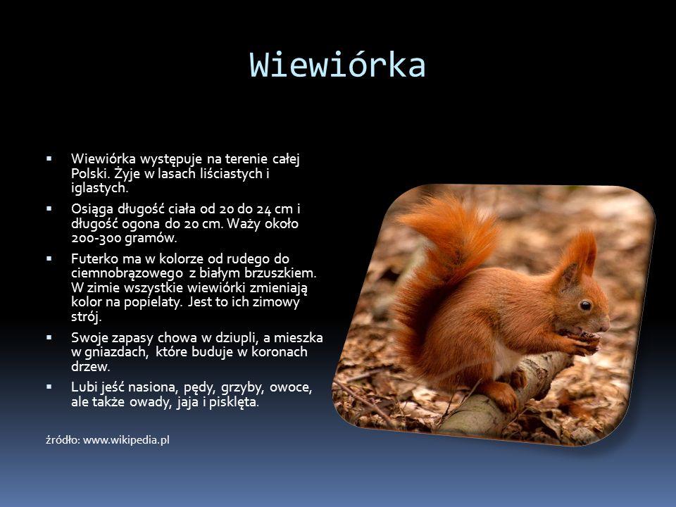 Wiewiórka Wiewiórka występuje na terenie całej Polski. Żyje w lasach liściastych i iglastych. Osiąga długość ciała od 20 do 24 cm i długość ogona do 2