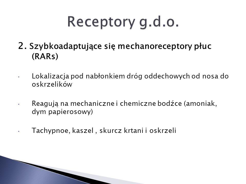 2. Szybkoadaptujące się mechanoreceptory płuc (RARs) Lokalizacja pod nabłonkiem dróg oddechowych od nosa do oskrzelików Reagują na mechaniczne i chemi