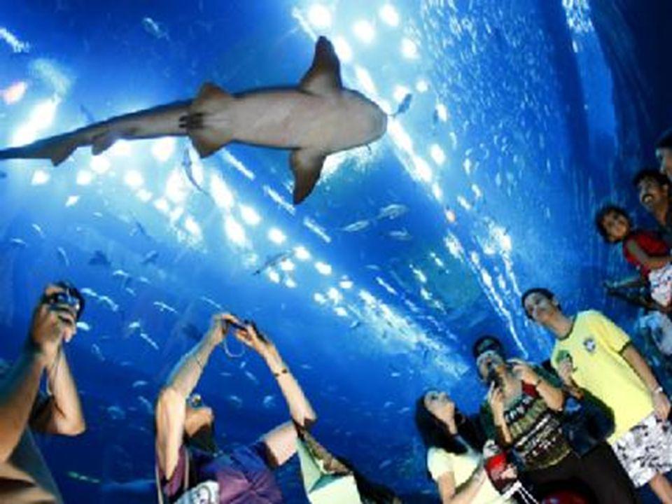 Tunel do zwiedzania akwarium