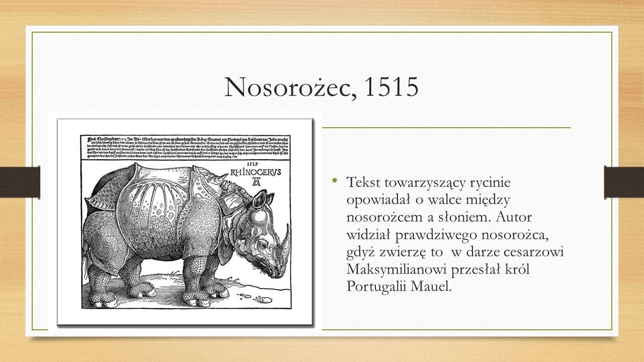 Nosorożec, 1515 Tekst towarzyszący rycinie opowiadał o walce między nosorożcem a słoniem. Autor widział prawdziwego nosorożca, gdyż zwierzę to w darze