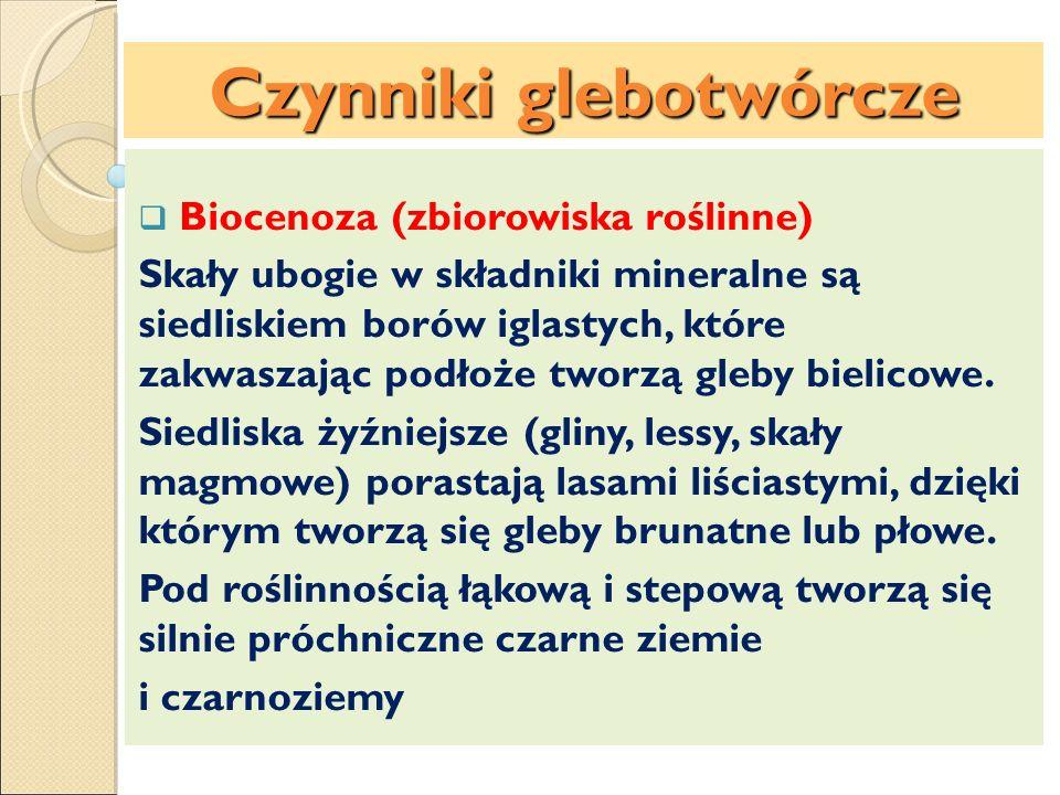 Biocenoza (zbiorowiska roślinne) Skały ubogie w składniki mineralne są siedliskiem borów iglastych, które zakwaszając podłoże tworzą gleby bielicowe.