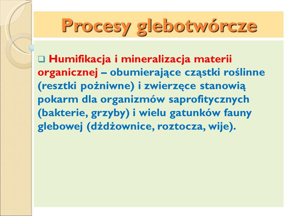 Procesy glebotwórcze Humifikacja i mineralizacja materii organicznej – obumierające cząstki roślinne (resztki pożniwne) i zwierzęce stanowią pokarm dl