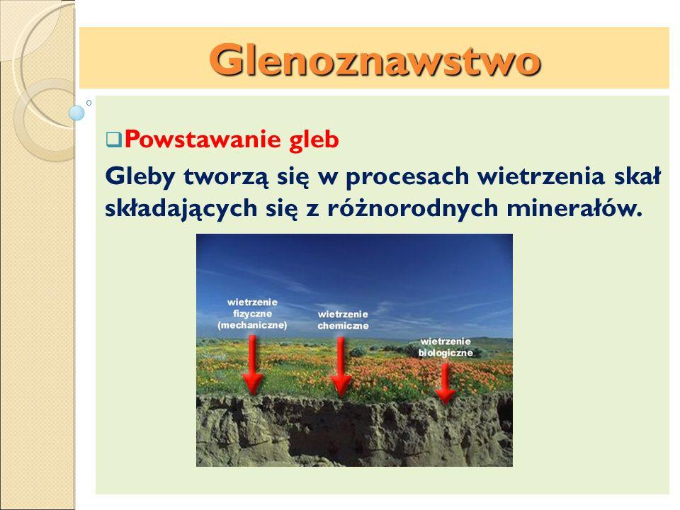 Powstawanie gleb Gleby tworzą się w procesach wietrzenia skał składających się z różnorodnych minerałów. Glenoznawstwo