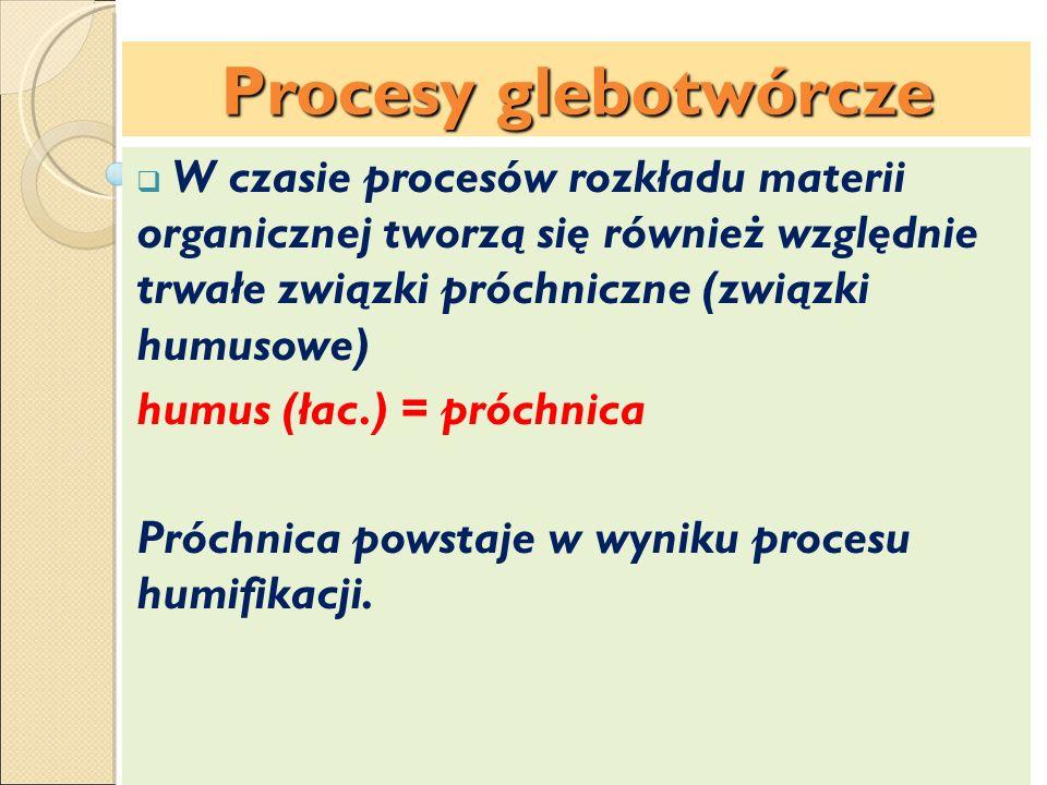 Procesy glebotwórcze W czasie procesów rozkładu materii organicznej tworzą się również względnie trwałe związki próchniczne (związki humusowe) humus (