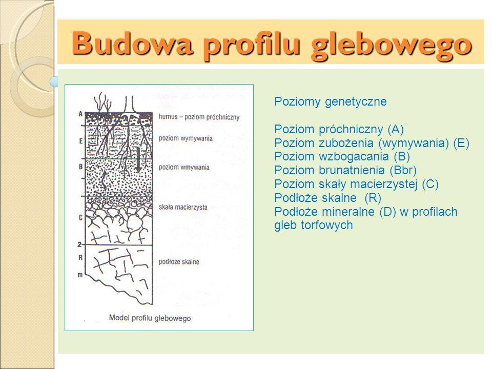 Budowa profilu glebowego Poziomy genetyczne Poziom próchniczny (A) Poziom zubożenia (wymywania) (E) Poziom wzbogacania (B) Poziom brunatnienia (Bbr) P