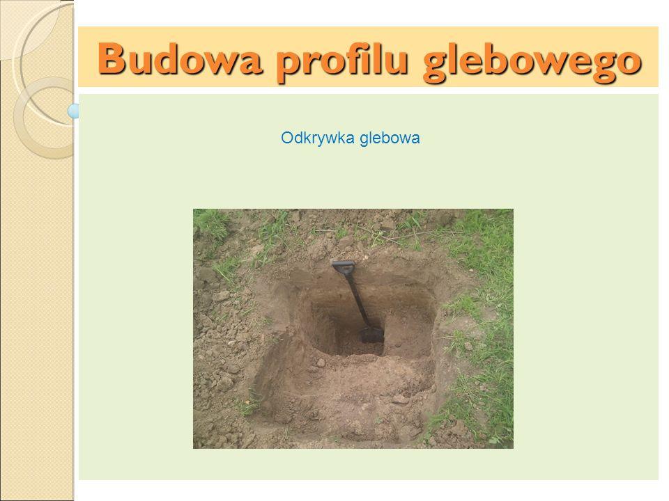 Budowa profilu glebowego Odkrywka glebowa