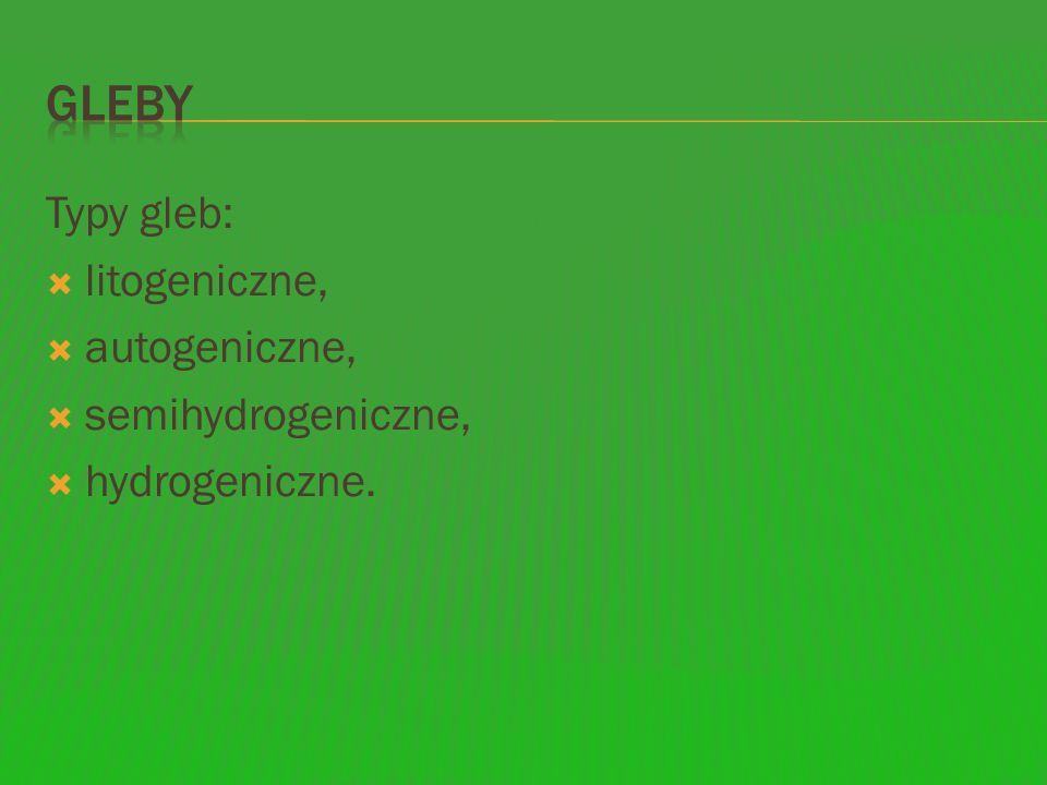 Typy gleb: litogeniczne, autogeniczne, semihydrogeniczne, hydrogeniczne.