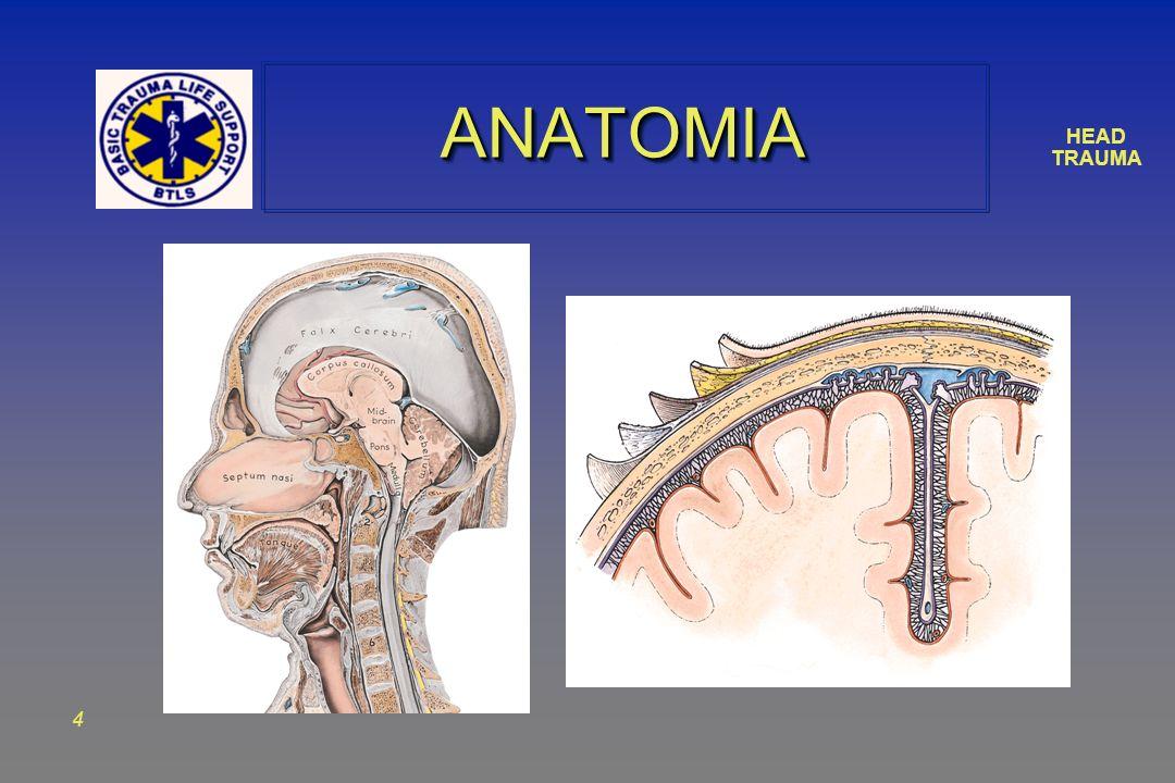 HEAD TRAUMA 4 ANATOMIAANATOMIA