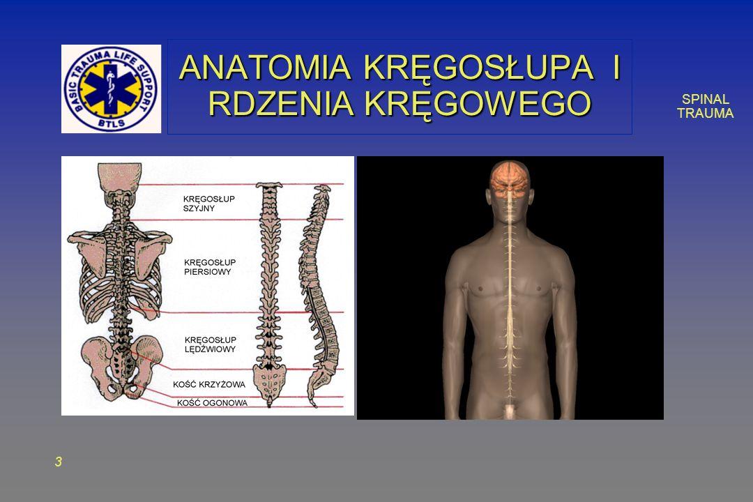 SPINAL TRAUMA 4 ANATOMIA KRĘGOSŁUPA Krąg Rdzeń kręgowy Wyrostek poprzeczny Wyrostek kolczysty