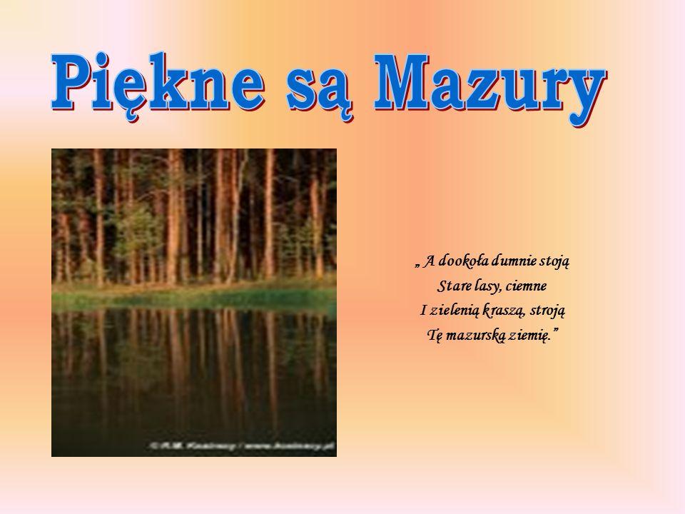 A dookoła dumnie stoją Stare lasy, ciemne I zielenią kraszą, stroją Tę mazurską ziemię.