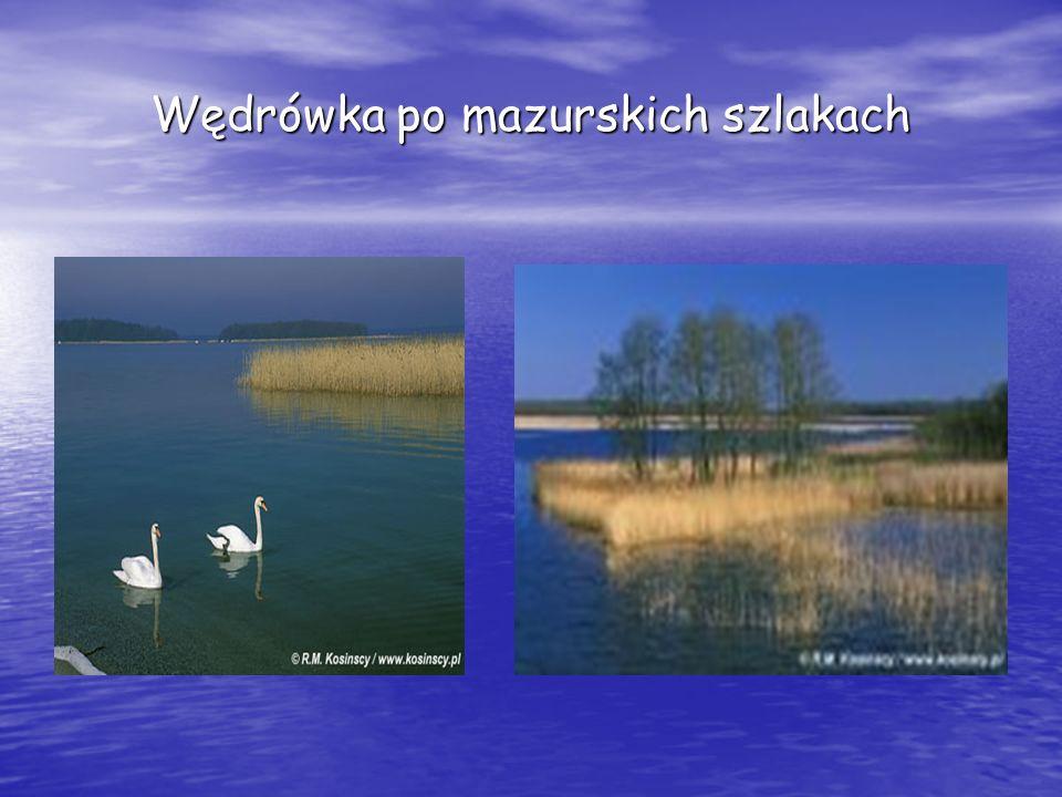 Twórczość Panie: -Bogumiła Łoś -Lidia Sawczuk -Irena Babut